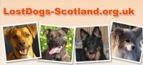 Lost Dogs Scotland